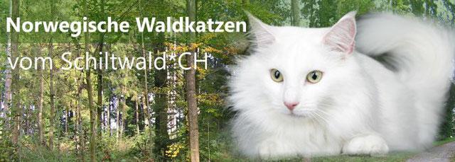 Gonfalon vom Schiltwald Lucerne Suisse Chats