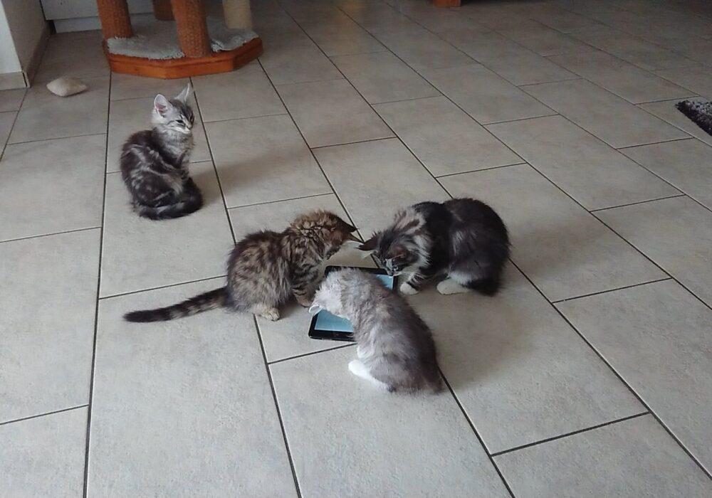 une App pour les Chats 😸