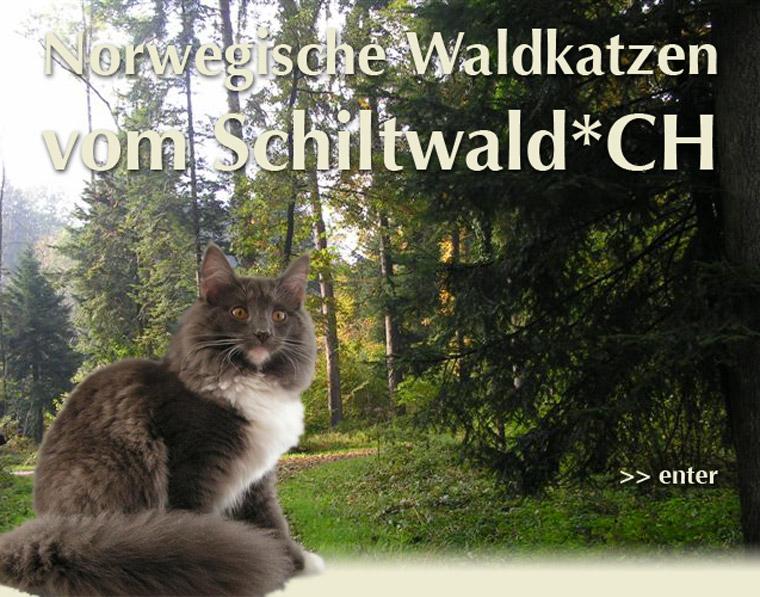 Bannière vom-Schiltwald Norvégien Chats des Forêts norvégiennes