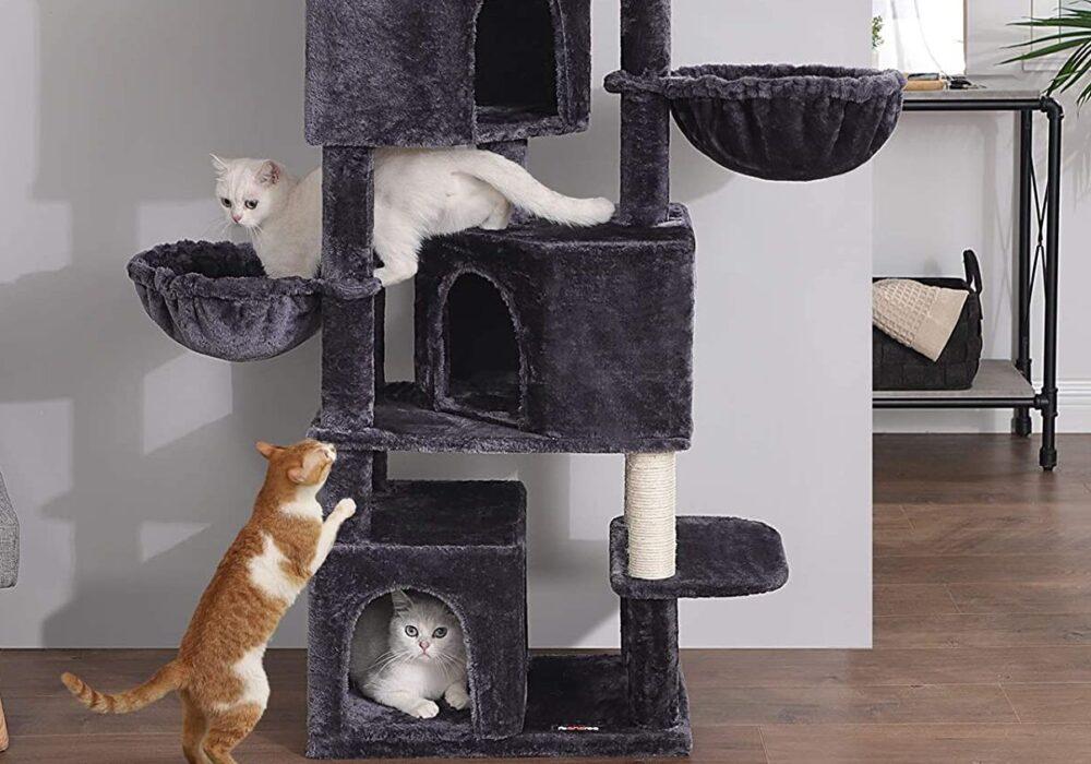 Griffoirs et Arbres à chat